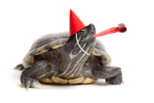 Turtle Wearing Party Hat And Blower 183140232