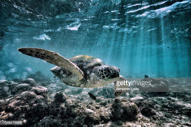 Turtles and Whale Sharks in the Philippines