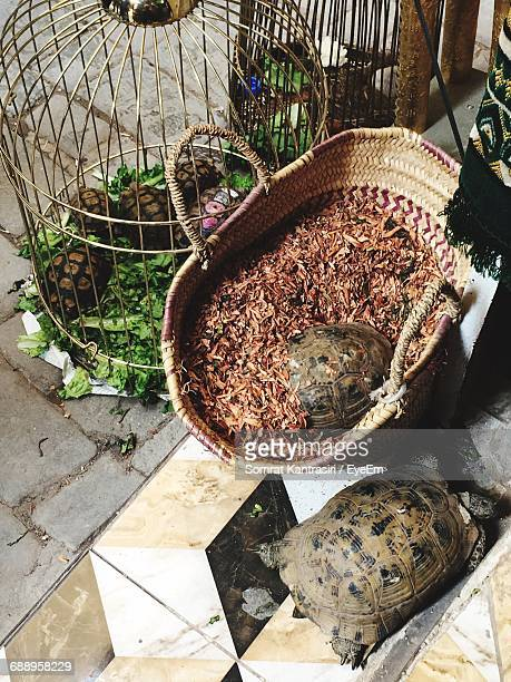 Turtles For Sale Outdoors