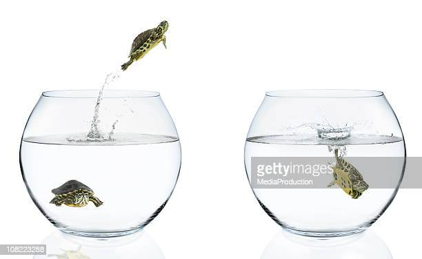 Turtles Jumping From Fishbowls