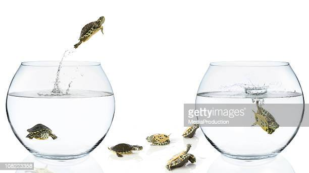 Turtles Jumping from One Bowl To another