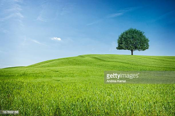 tuscan hills - rolling landscape stock pictures, royalty-free photos & images