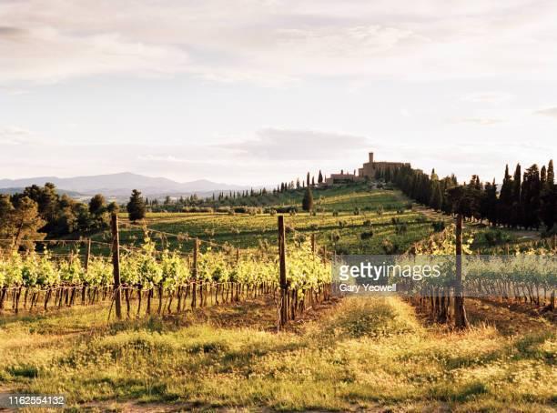 tuscan landscape at sunset - モンタルチーノ ストックフォトと画像