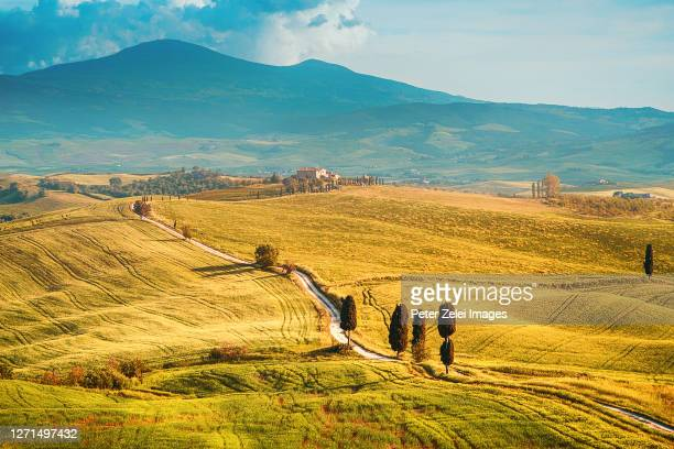 tuscan landscape with cypress trees - val d'orcia foto e immagini stock