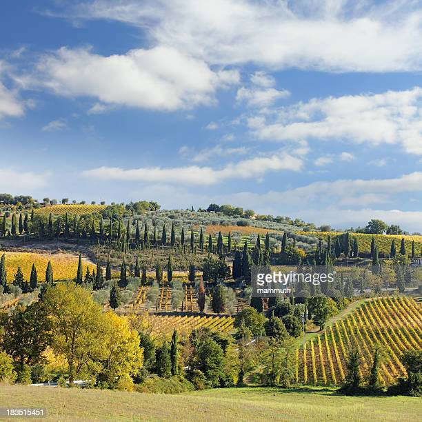 tuscan landscape with vineyards - italian cypress stock photos and pictures
