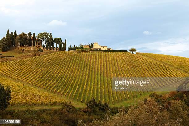 Tuscany Weinberge in Chianti Fall Zeit Blau