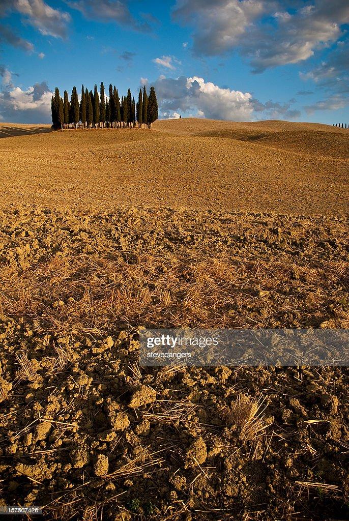 Toscana Cypress trees : Foto de stock