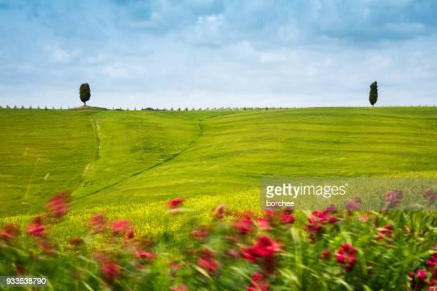 Tuscany Feld an einem windigen Tag