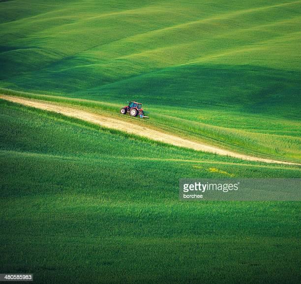 Toscana campo