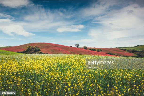tuscany field - clover stock photos and pictures