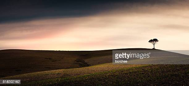 Tuscany Fields With Lonely Tree