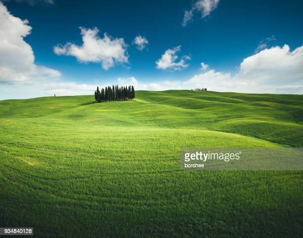 Toskana-Hügel mit Zypressen