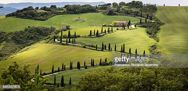 Tuscany, landscape and cypress road