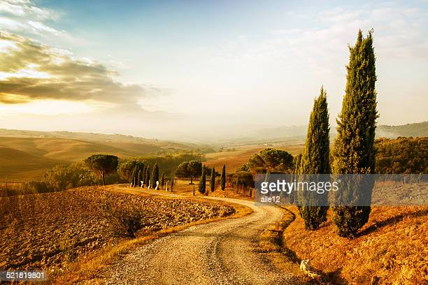 tuscany landscape at sunrise - cypress tree stock pictures, royalty-free photos & images