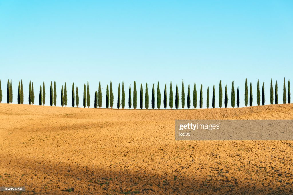 Tuscany landscape of cypresses trees, Val d'Orcia, Italy : Stock Photo