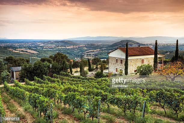paysage en toscane - italie photos et images de collection
