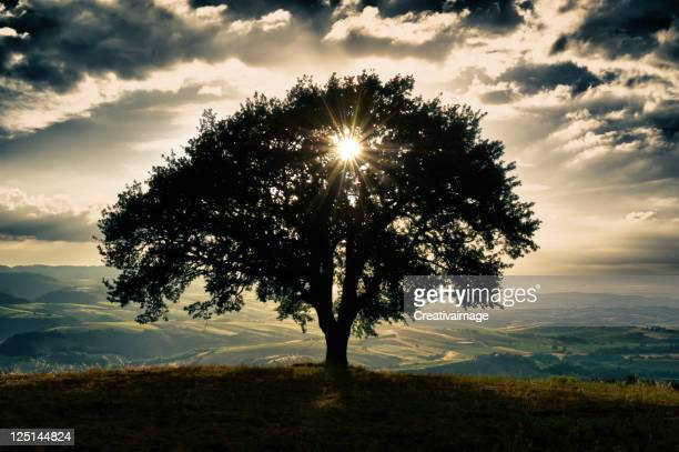 tuscany landscape - single tree stock pictures, royalty-free photos & images