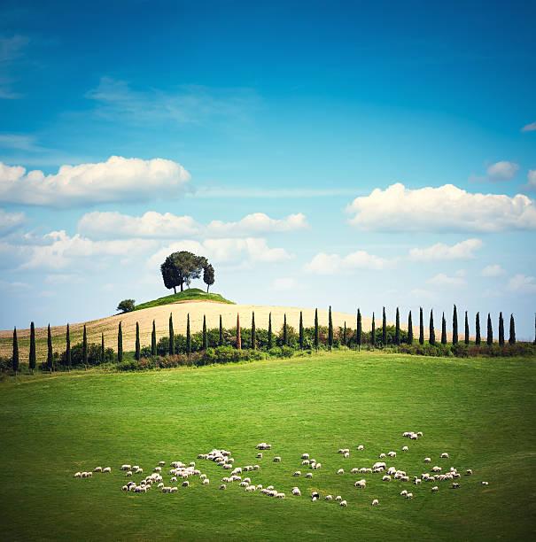 Tuscany Landscape Wall Art