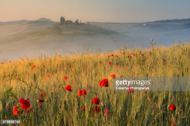 tuscany landscape with an old farmhouse surrounded by cypresses. (val d'orcia, tuscany). - toscane stockfoto's en -beelden
