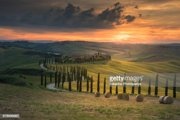 tuscany landscape with cypresses tree , val d'orcia ,toscana , italy. - val d'orcia foto e immagini stock