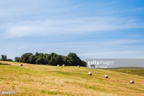 tuscany landscape with wheat bales - san miniato stock pictures, royalty-free photos & images