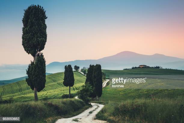 tuscany road - cypress tree stock pictures, royalty-free photos & images