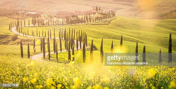 Tuscany, springtime at sunset