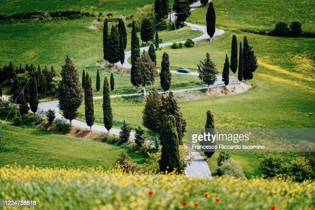 tuscany, springtime in the morning. via francigena curved road and cypress trees. - san quirico d'orcia stock pictures, royalty-free photos & images
