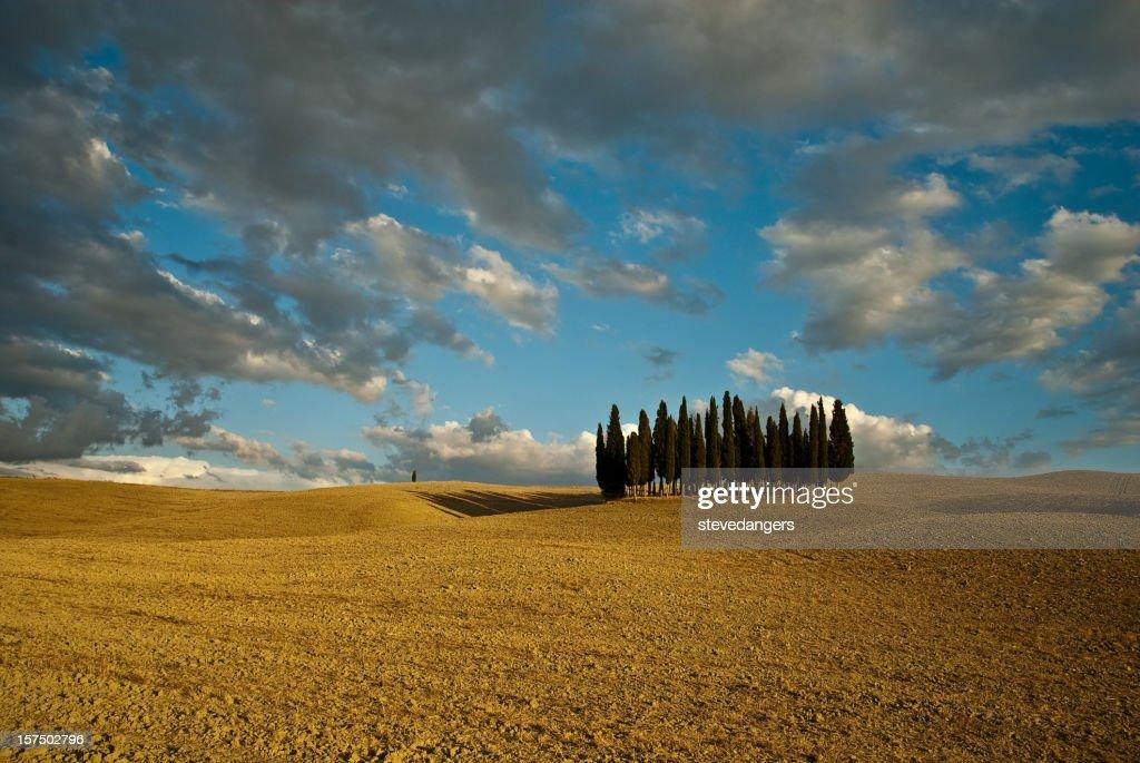 Toscana Val d'Orcia alberi : Foto stock