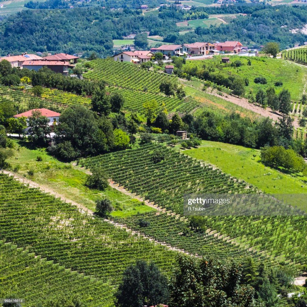 Tuscany Vineyard Landscape Of Italy Stock Photo - Getty Images