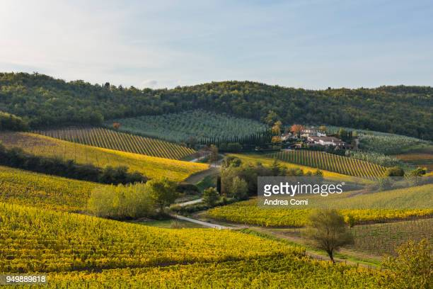 Tuscany vineyards in autumn