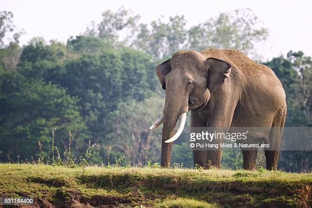 Tusker in Karnataka