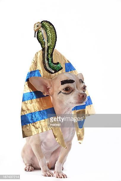 tutankamon - death mask of tutankhamen stock pictures, royalty-free photos & images