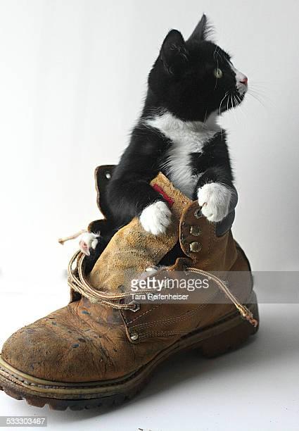 Tuxedo Cat Puss N' Boots
