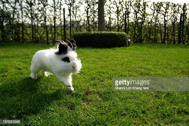 tweepee the rabbit enjoying running in the garden - nee nee stock pictures, royalty-free photos & images