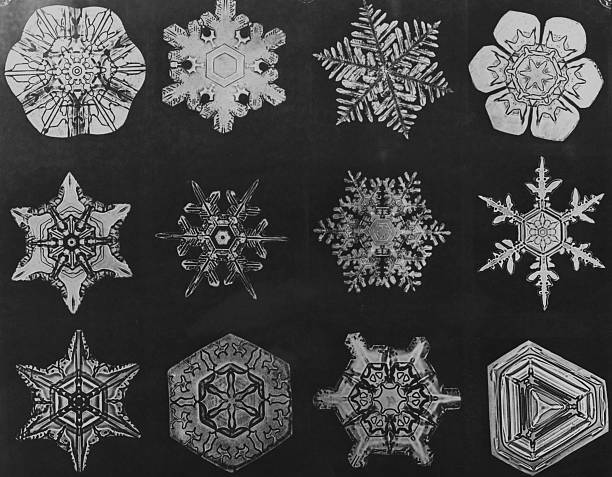 Twelve snow crystals photographed under a microscope,...
