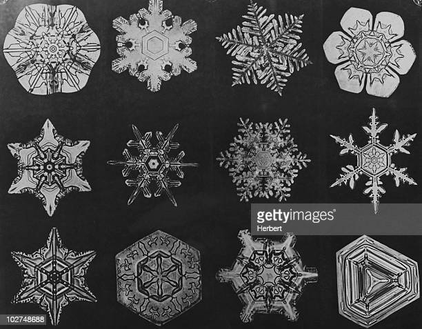 Twelve snow crystals photographed under a microscope circa 1935