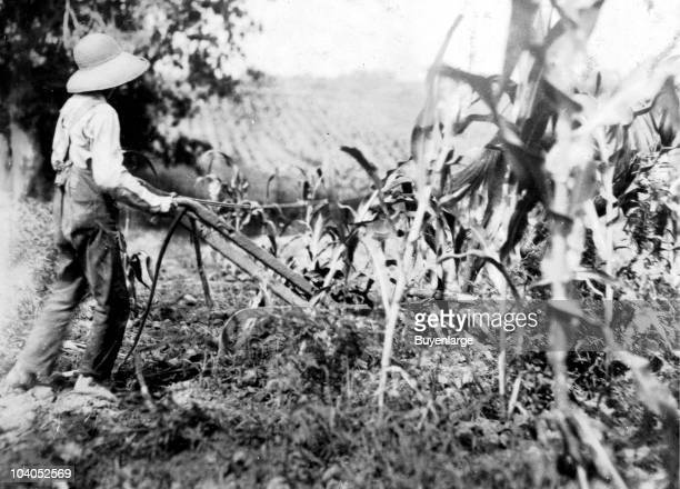 Twelve year old Hugh Oliphant drives a double shovel plow while tending to crops on a farm in Bowling Green KY 1916