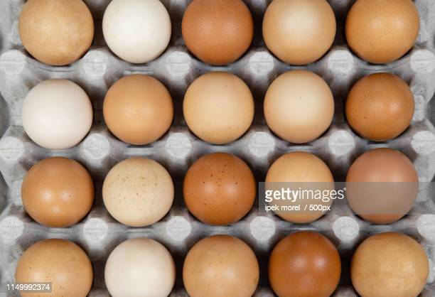 twenty chicken eggs in a carton tray - ipek morel stock pictures, royalty-free photos & images