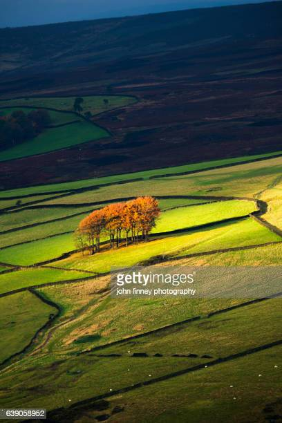 Twenty trees in Derbyshire in Autumn. Peak District National park. UK