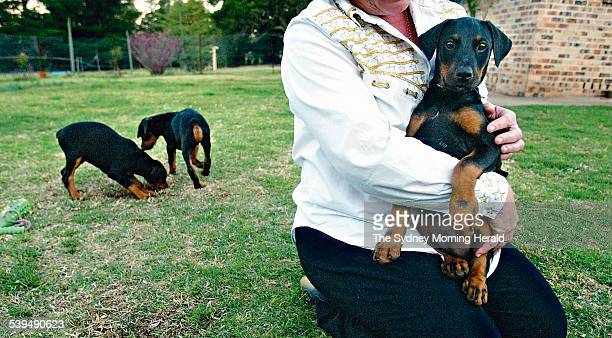 Twenty week old Doberman pups at Ray and Corrine Nunn s Oakdale property on 21 September 2004 DNA testing for pedigree dogs SMH NEWS Picture by...