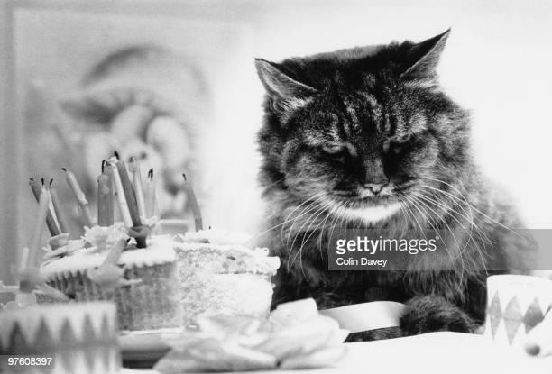 A twentysevenyearold cat celebrates her birthday 22nd August 1977