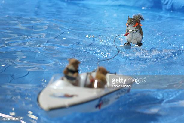 Twiggy the Water Skiing Squirrel gets in some practice runs before her shows at the Toronto International Boat Show that runs January 817 at the...