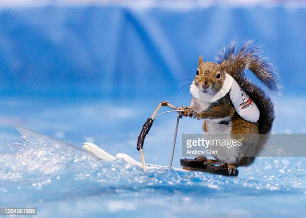 Twiggy the waterskiing squirrel performs at the Vancouver International Boat Show at BC Place Stadium on February 08, 2020 in Vancouver, Canada.