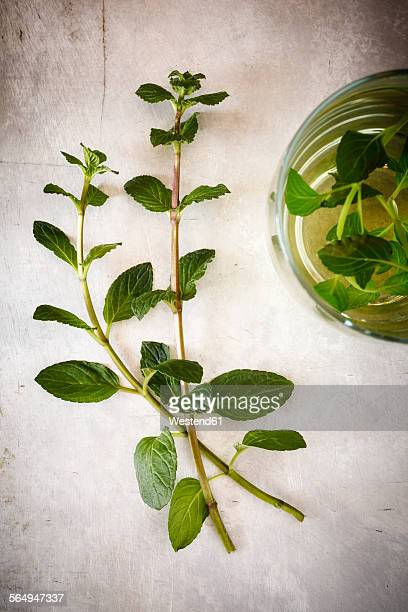 Twigs of fresh mint and peppermint tea on metal