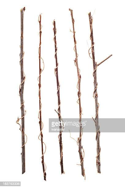 Twigs, Sticks and Branches Isolated on White