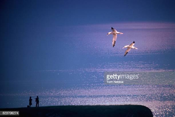twilight at land's end - albatros stock-fotos und bilder