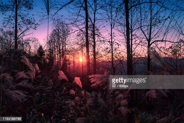 twilight - elm tree stock pictures, royalty-free photos & images