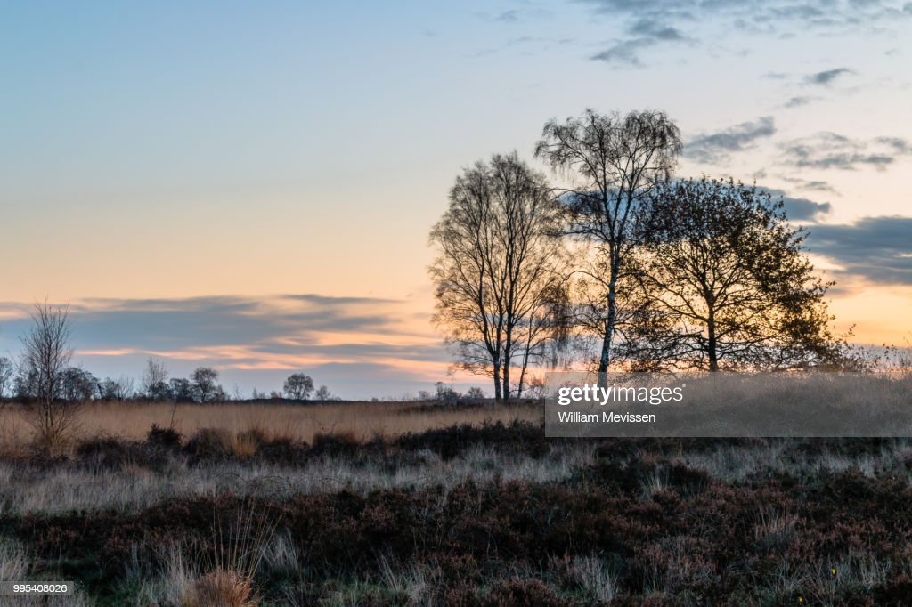Twilight Silhouette Trees : Stockfoto