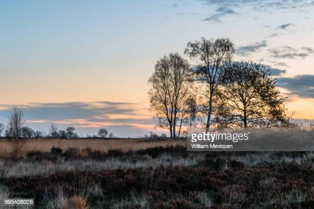 twilight silhouette trees - william mevissen stockfoto's en -beelden
